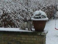 Dyrene i det kolde vejr