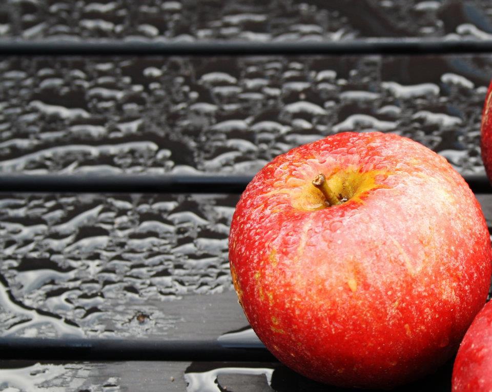 ÆBLER KAN HJÆLPE SOLSORTEN