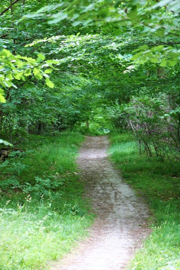 Syng foråret ind - Boserup Skov