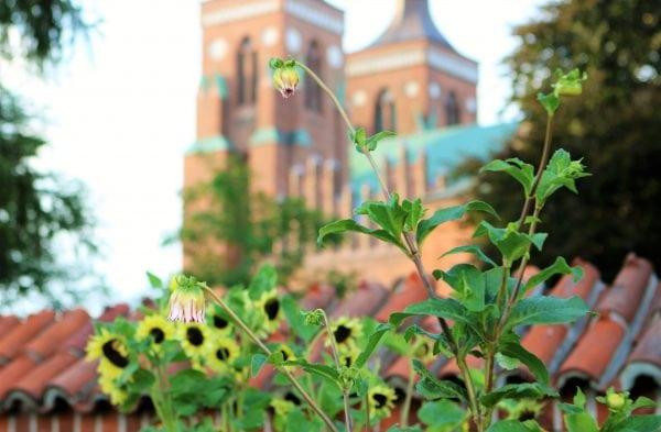 De Glemte Dronninger: Efterårsferie i Domkirken
