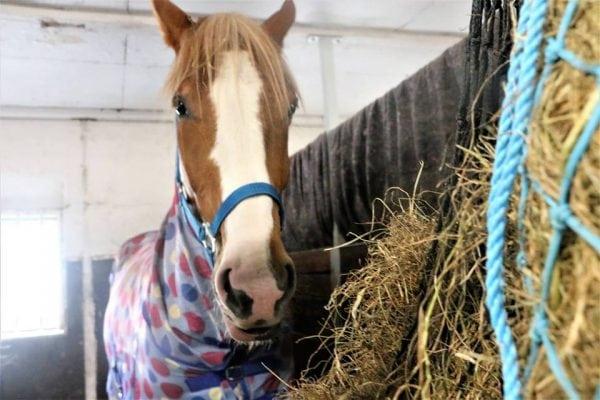 Speciale i hø til din hest