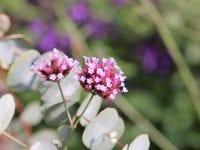 Nyd blomsterne langt ind i efteråret