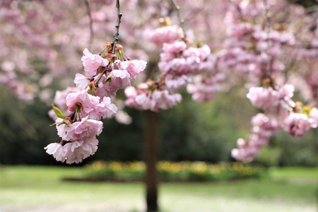Spring ind i foråret