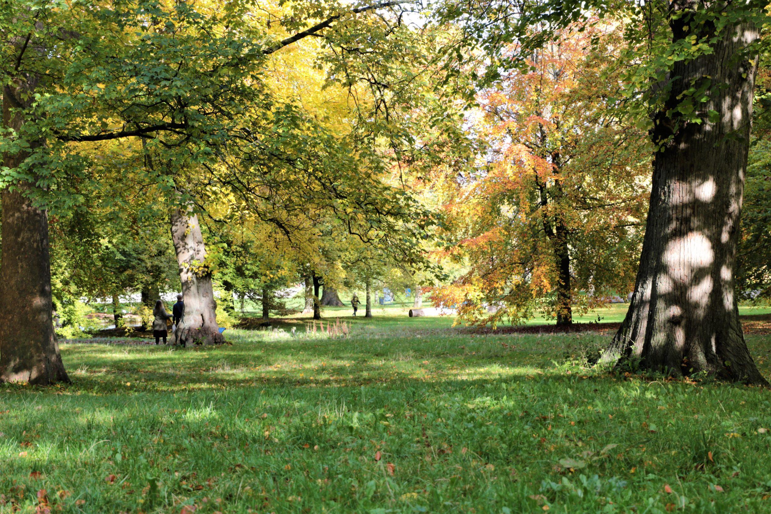 Når efteråret rammer Roskilde