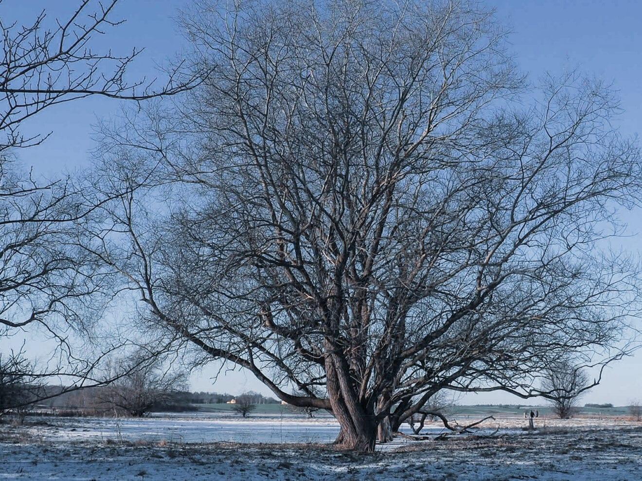 Livets vinter træ