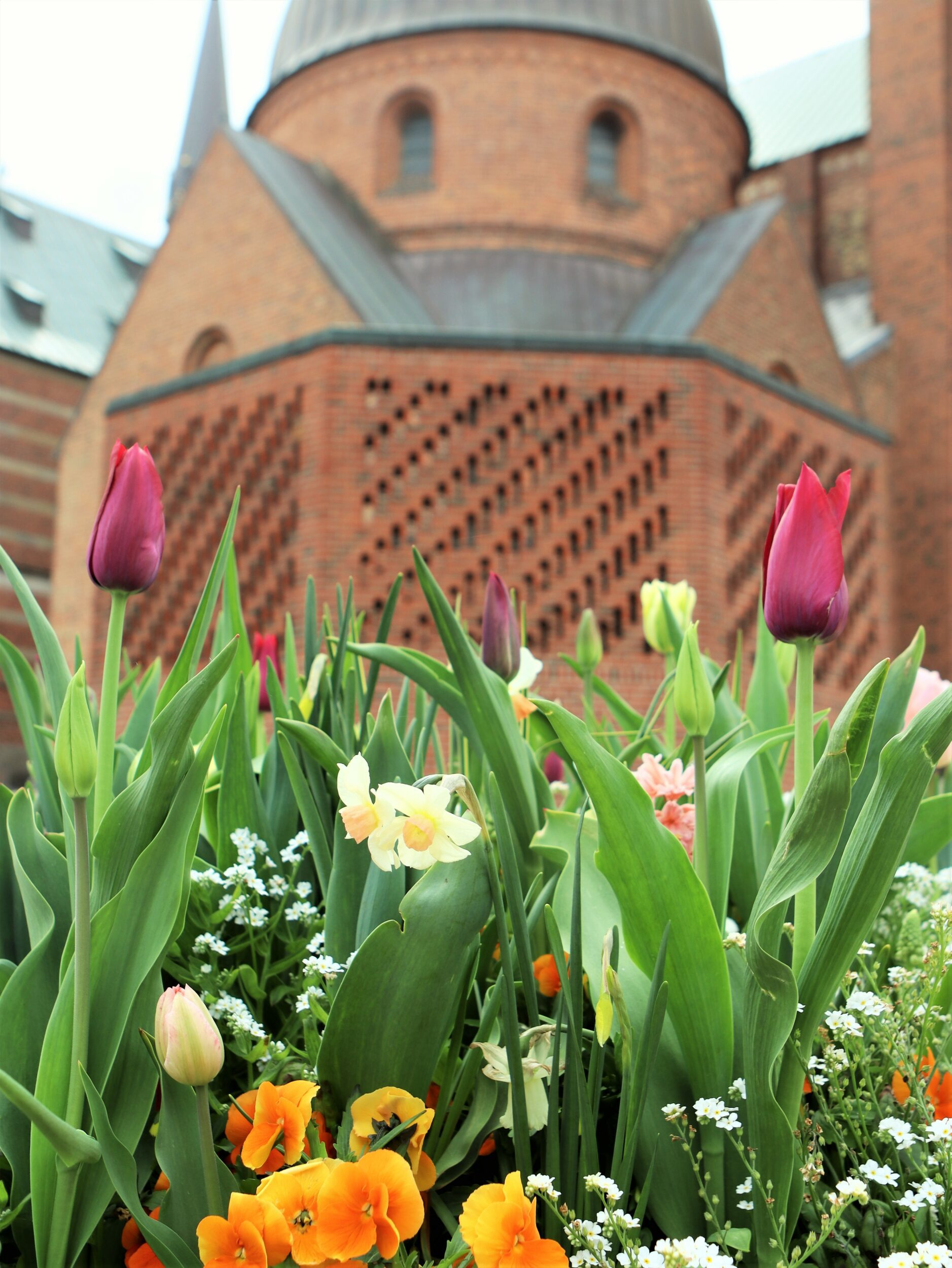 Blomsterne glæder i Roskildes stræder